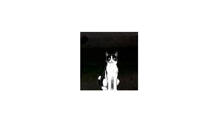 รีวิว มาเลี้ยงน้องแมวบนหน้าจอกันดีกว่า ^__^