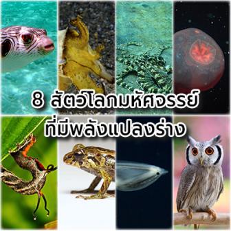 8 สัตว์โลกมหัศจรรย์ที่สามารถแปลงร่างได้